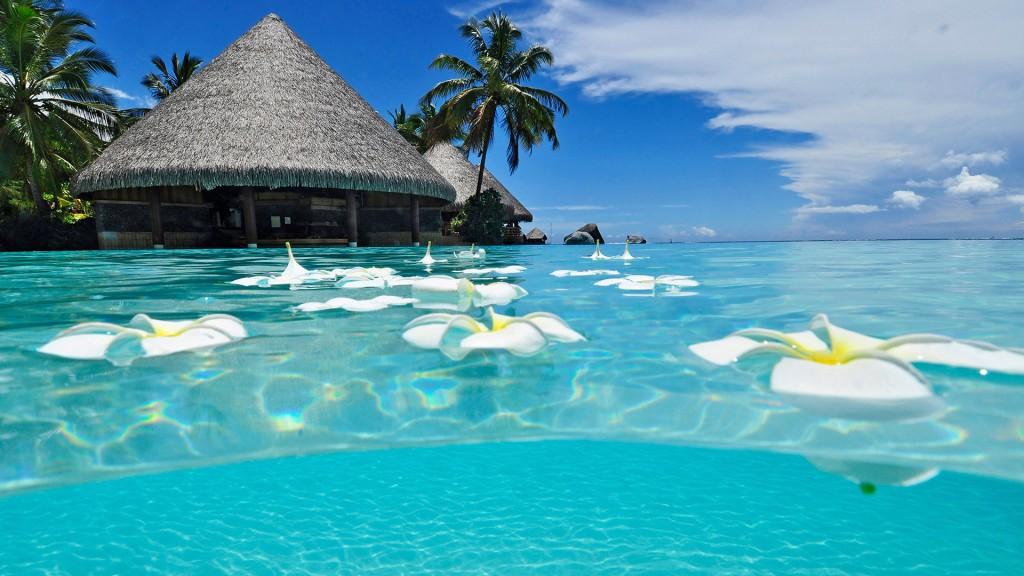 tropical-beach-paradise-backgroundshd-tropical-beach-paradise-hd-wallpapers---wallpaperstropical-4i7rg2wt