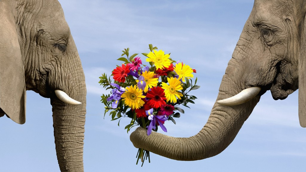 Elephants-also-romantic_1920x1080