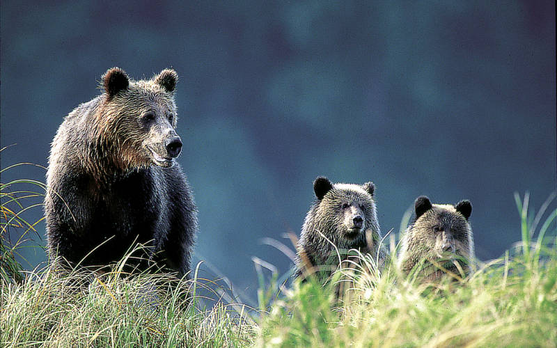 grizzly-bear-watching-at-knight-inlet-campbell-river-33735951-1389867215-ImageGalleryLightbox