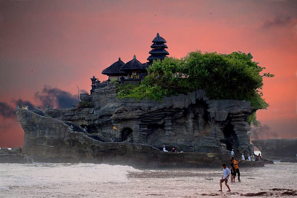 vaca-Belalang-Bali-Indonesia